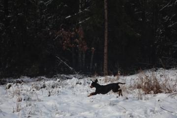 Kocham zimę! A jeszcze bardziej śnieg, którego w anno Domini 2016 było bardzo mało.