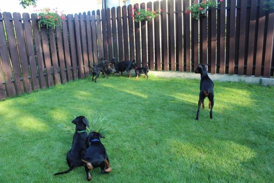 Zabawa w ogródku u manchesterów.